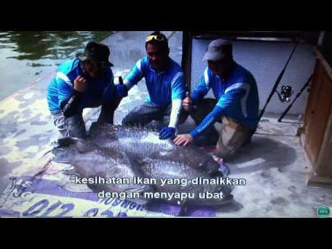 LS Fishing Pond 2015 Video 0123236767