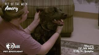 Pet Spotlight: Meet Amery