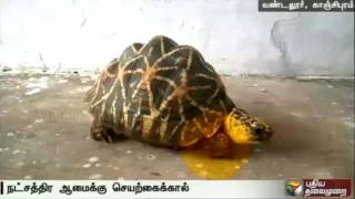 Artificial Legs Attached For Tortoise At Vandaloor Zoo