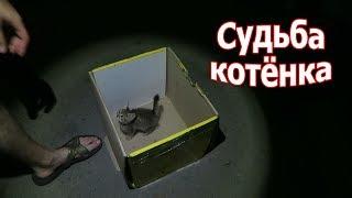 VLOG: Мое меню изменилось / Судьба невинного котенка
