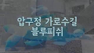 [강남셀카봉뉴스]날아다니는블루피쉬~ 썸네일 이미지