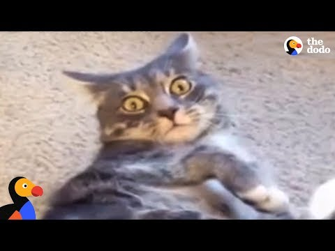 CAT FAILS: Cats vs The World | The Dodo