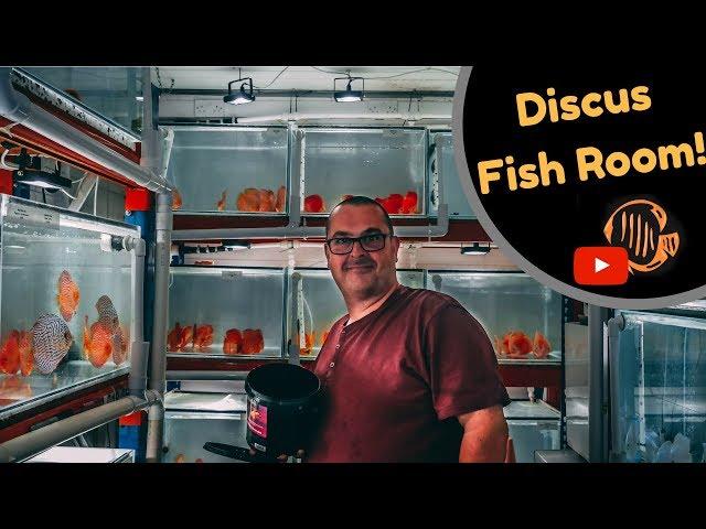 Amazing Discus Fish Room! Martin Ng Discus Specialist.