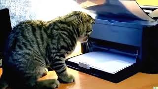 Приколы с Кошками  Смешное  Видео Про Котов 100% позитив