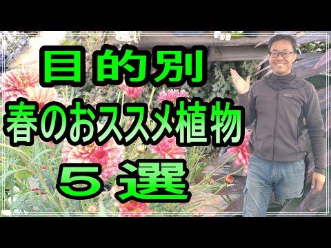 , title : '[ガーデニング] 目的別 春のオススメ植物5選「キャリア28年のプロガーデナーが入荷したオススメ植物たち」