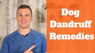 Dog Dandruff Remedies - How To Quickly Eliminate Dog Dandruff