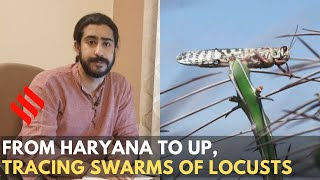 From Haryana to U.P, tracing swarms of locusts | Locusts Attack India