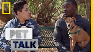 Pets Eat the Darnedest Things | Pet Talk