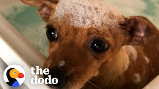 Tiny Scared Dog Loves Her Bubble Baths | The Dodo Foster Diaries by The Dodo