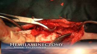 Hemilaminectomy Dog hemilaminectomy prproj