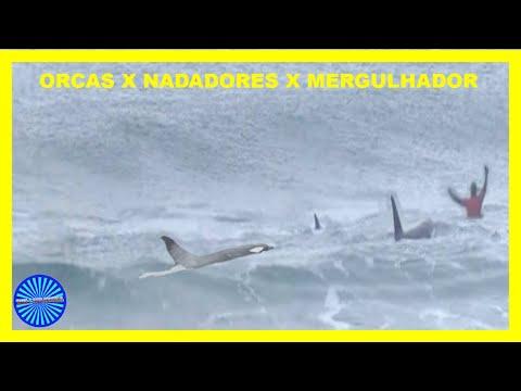 BANHISTAS ESCAPANDO DE ORCAS - BALEIAS ASSASSINAS