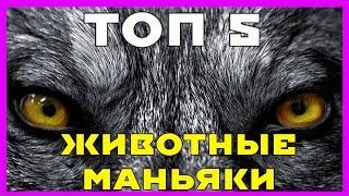 ТОП 5: Топ Животных Маньяков