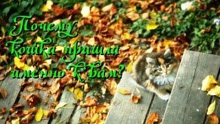 Магия кошек Почему кошка пришла именно к вам?