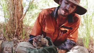 Billy and the Northern Quolls