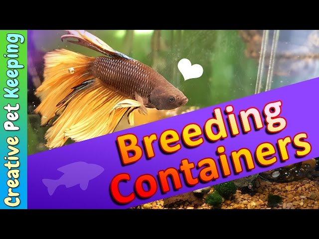 Breeding Containers for Betta Fish