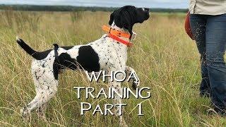 Teaching Your Dog Whoa Part 1- Upland Bird Dog Training