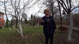 Обработка яблонь и груш весной от вредителей и болезней видео
