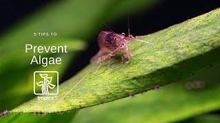 Zapobieganie glonom wg. Tropica