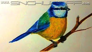 Синичка цветными карандашами.