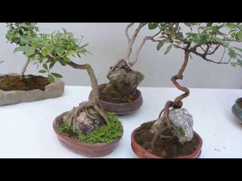 Piedras volc nicas para las plantas plantas for Como decorar mi patio con piedras
