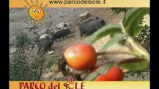 preview picture of video 'Il parco del sole.flv'