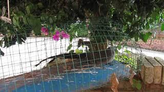 Тропическая птица. Завод по производству чая пуэр в Юньнань.