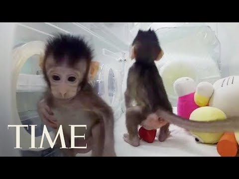 Scientists Have Cloned Monkeys For The First Time, Are Humans Next? | TIME