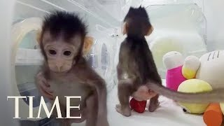 Scientists Have Cloned Monkeys For The First Time, Are Humans Next?   TIME