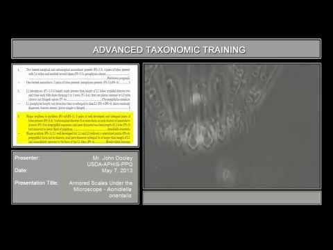 Armored scales under the microscope – <em>Aonidiella orientalis</em>