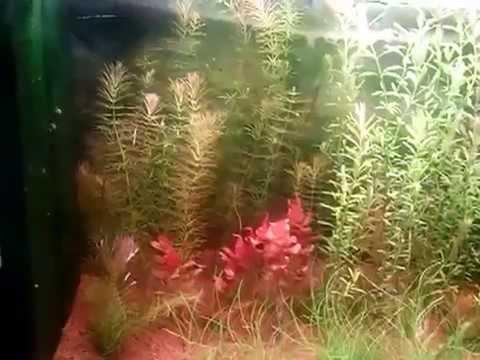 Allestimento acquario asiatico