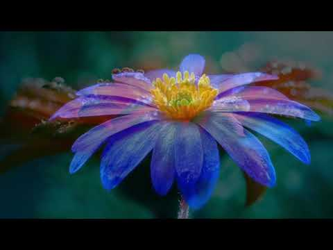 Richard Noll ~ Open Heart Video | Heartfelt Music for Relaxation