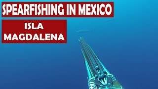Spearfishing in Mexico - Magdalena Bay Camping - Blue water Hunter