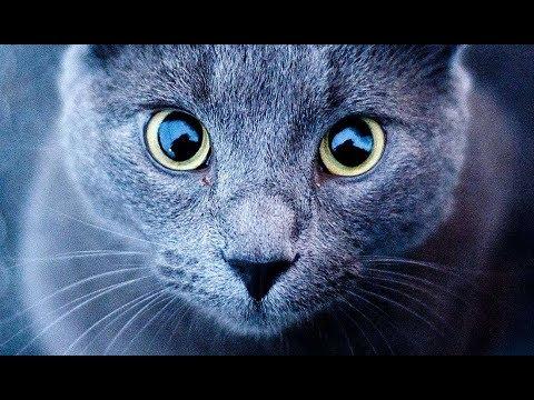 A Un Gatto Striscia Il Congedo Attraverso Una Bocca