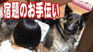 シェパード犬小学生の宿題お手伝いGerman Shepherd Dog