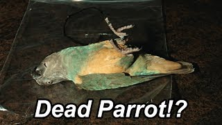 Is this Parrot Really Dead!?