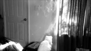Melon Yellow - Slowdive ~ Slow smoke