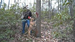 Squirrel Hunting with a Blackmouth Cur