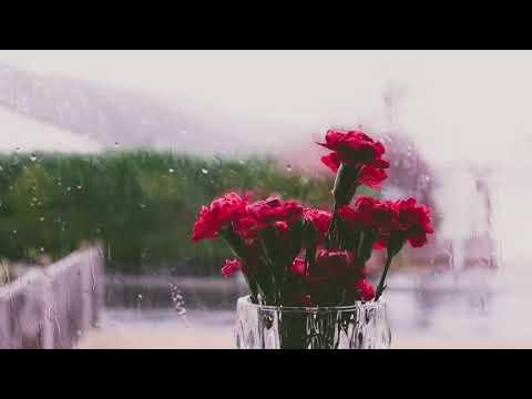 sonido De Lluvia Para Relajarse - Rain Sound For Relax