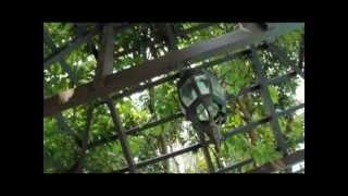 preview picture of video 'Tanjung Emas Private Villa, Muar'