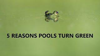 Why Do Pools Turn Green?