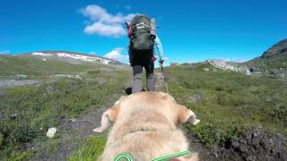 Mountain hiking with my dog in the Swedish fells