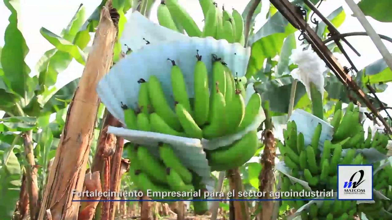 Fortalecimiento Empresarial para el sector agroindustrial