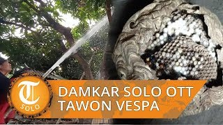 Video Detik-detik Damkar OTT Tawon Vespa di Manahan Solo, Temukan Empat Titik Sarang
