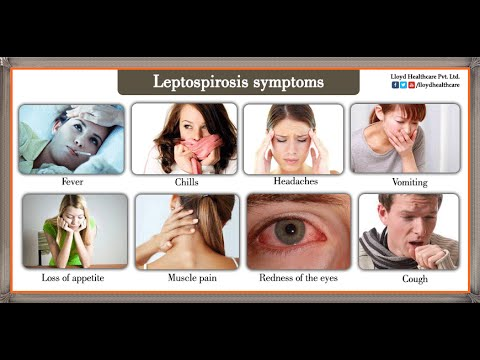 Video Leptospirosis : Treatment and Symptoms : New kit the cost per test will only be Rs. 50