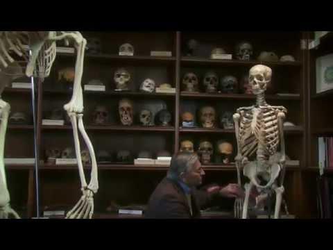 Der Video-Film über die Parasiten