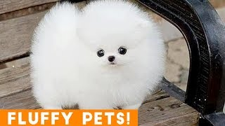 Cutest Fluffy Pets Ever 2018 | Funny Pet Videos