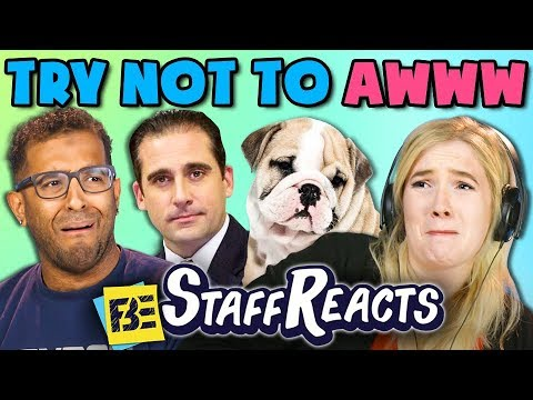 TRY NOT TO AWWW CHALLENGE #3 (ft. FBE Staff)