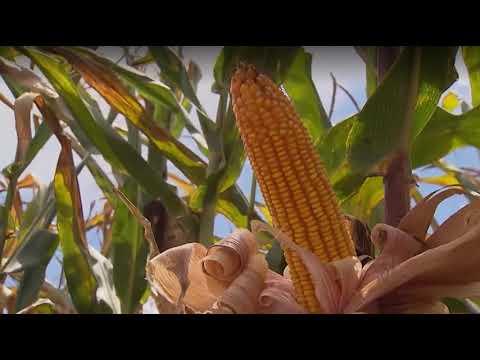 Paripiranga e Adustina é destaque em reportagem do programa Bahia Rural da TV Bahia
