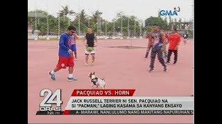 24 Oras: Jack Russell Terrier Ni Sen. Pacquiao Na Si Pacman, Laging Kasama Sa Kanyang Ensayo