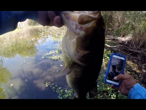 Local Pond Bass Fishing – 6.15.2014